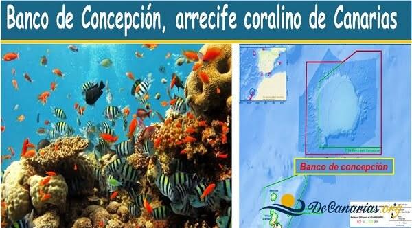 arrecifes de coral en canarias